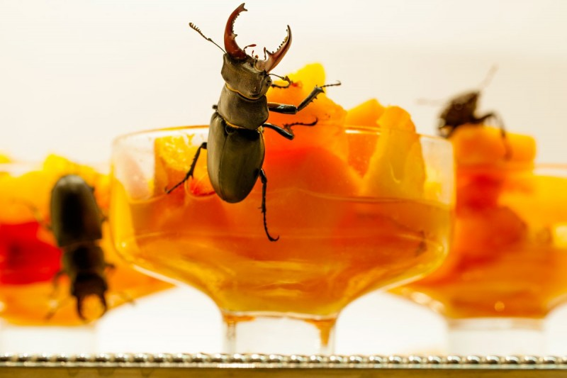 Bugs for breakfast series (Trionfo di Lucanus cervus)